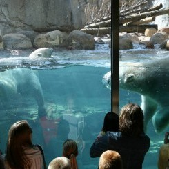 Featured: Memphis Zoo
